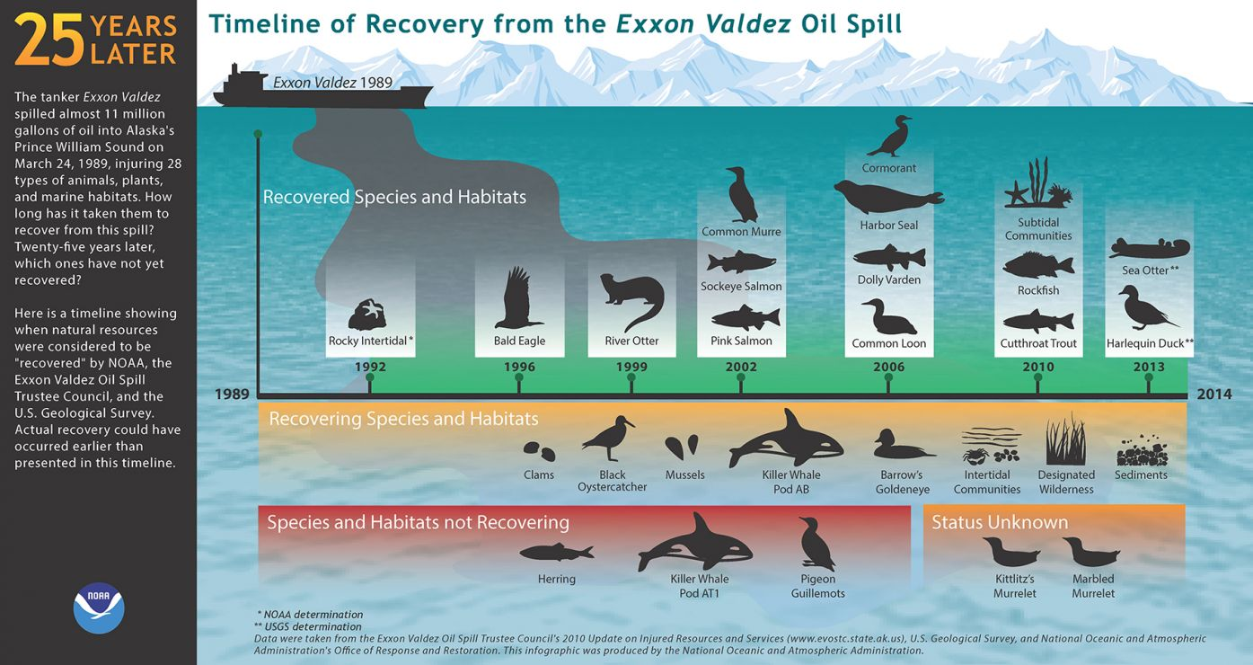 An infographic depicting the recovery times for different animals.