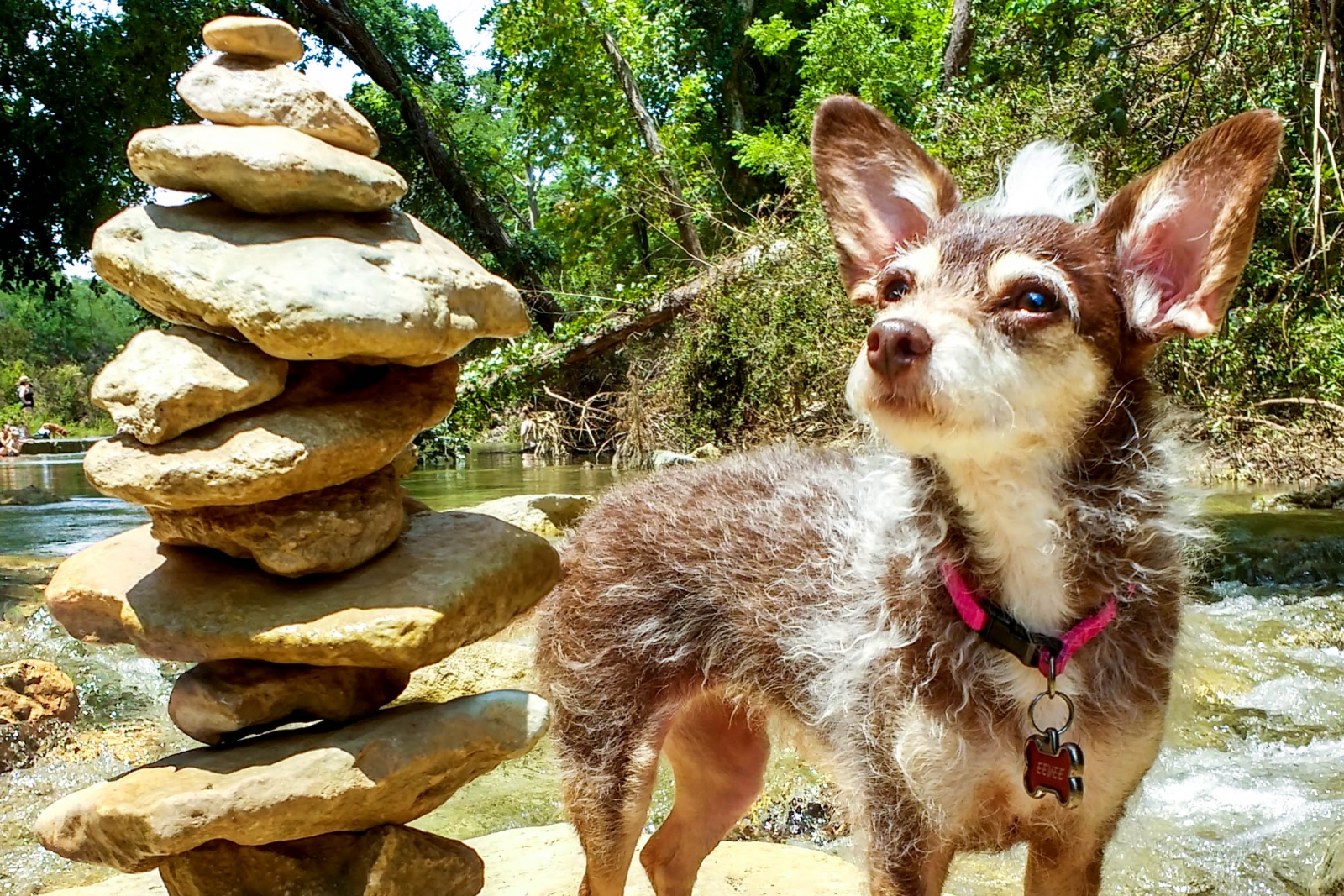 A small dog standing next to a pile of stacked rocks.
