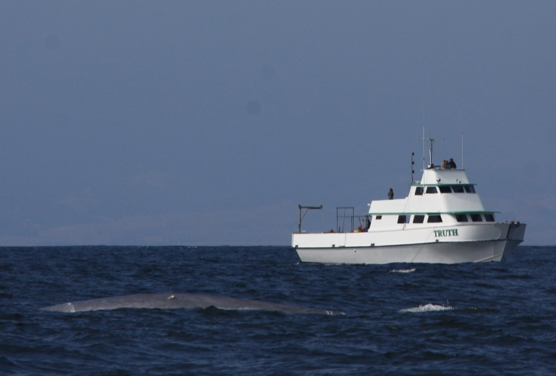 "A tagged whale with a vessel called ""Truth"" in the background."