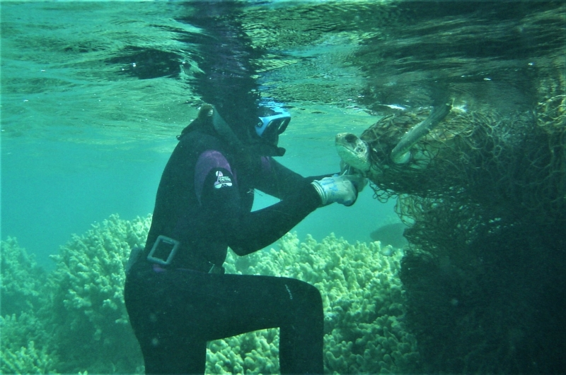 A diver underwater removing a sea turtle from a marine net.