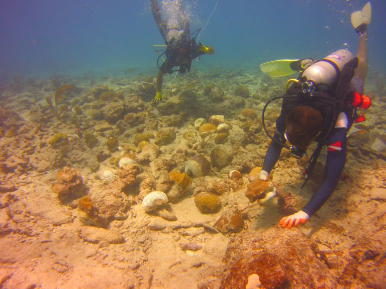 Divers attaching corals to the sea floor.