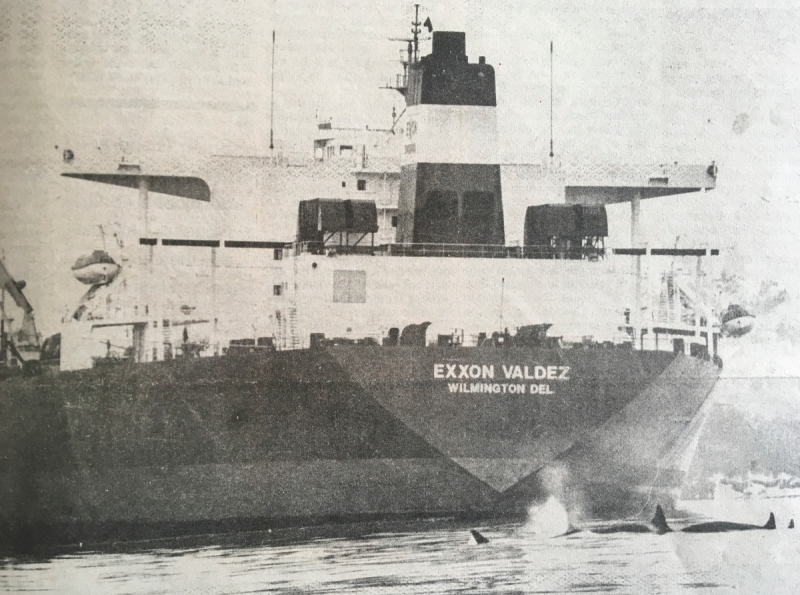 "An old photo of orcas swimming in front of a vessel, the ""Exxon Valdez."""