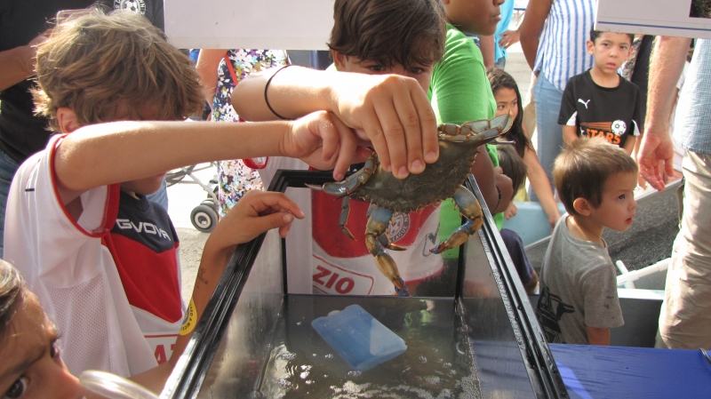 Two kids holding a blue crab above a water tank.