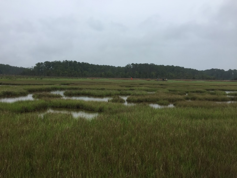 A photo of a marsh.
