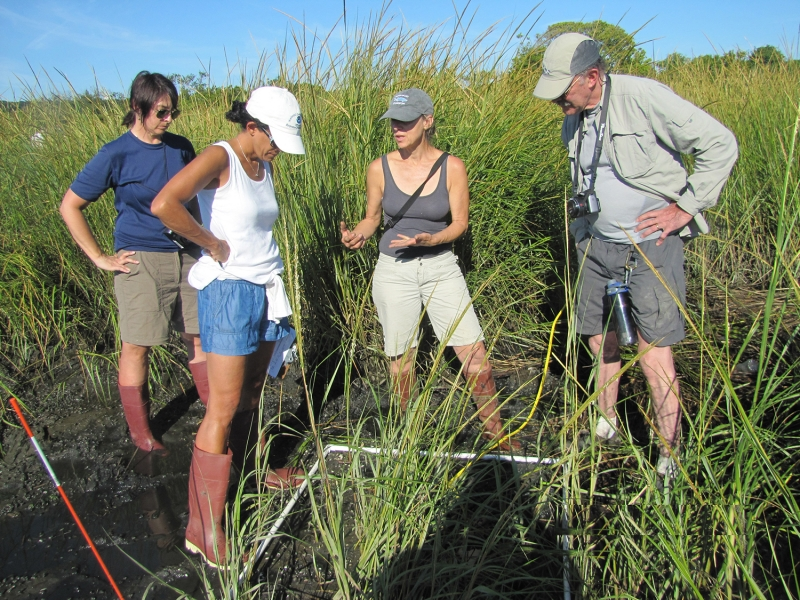 A group of people standing in a marsh.
