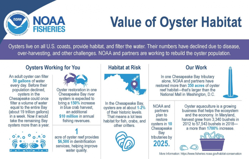 An infographic describing the value of oyster habitat.