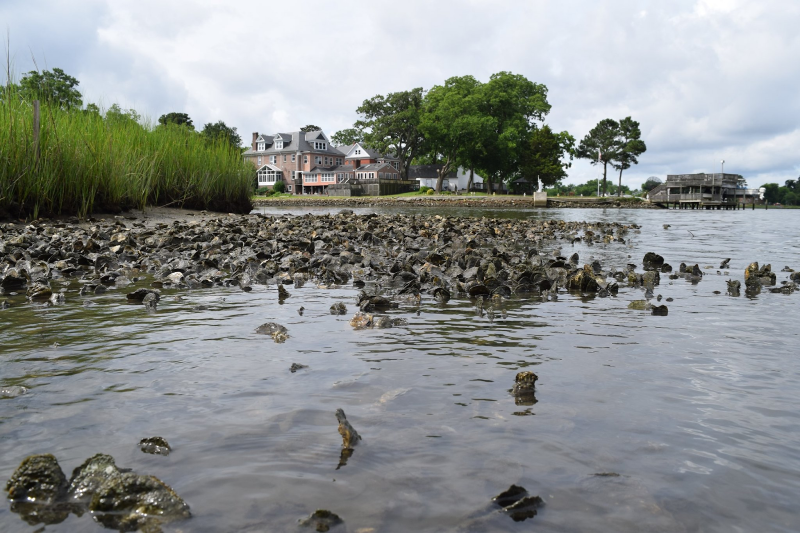 Oyster reefs near a shore.