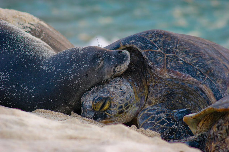 A seal and a sea turtle on a beach.