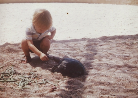 A child on a sandy area feeding a turtle.