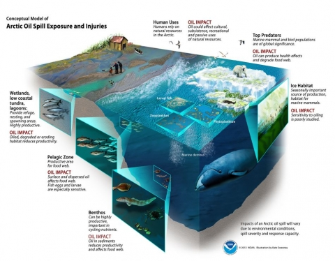 An infographic showing cutaway illustrations of various species and habitat impacted by oil in the Arctic.