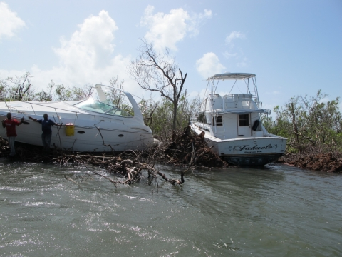 A group of people looking over one of two vessels grounded in a mangrove.