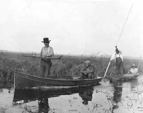 Four people, with two to a boat, navigating through a wild rice bed.