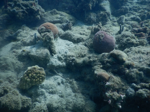 An underwater image of corals.