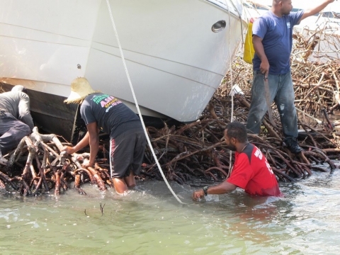 A group of people working around a vessel grounded in a mangrove.