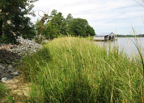 A view of marsh grass in the foreground with a boathouse in the background.