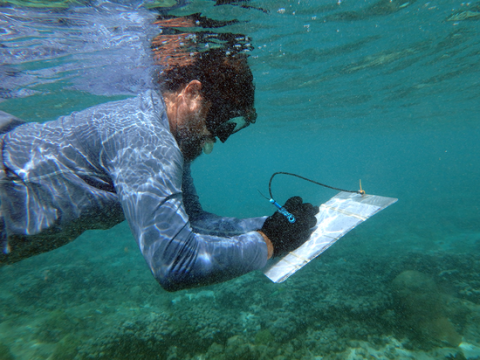 An underwater photo of a man writing on a clipboard.