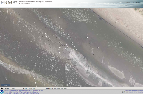 A screenshot of an ERMA aerial image depicting white dots, possibly birds, flying over the shoreline.