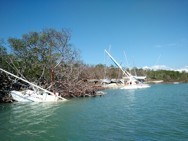 Several sinking, derelict vessels along a shoreline.