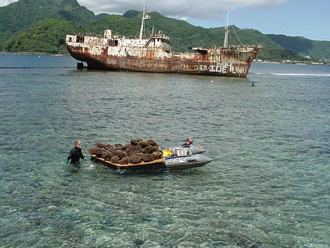 A woman standing next to a boat with corals on it and a derelict vessel in the background.