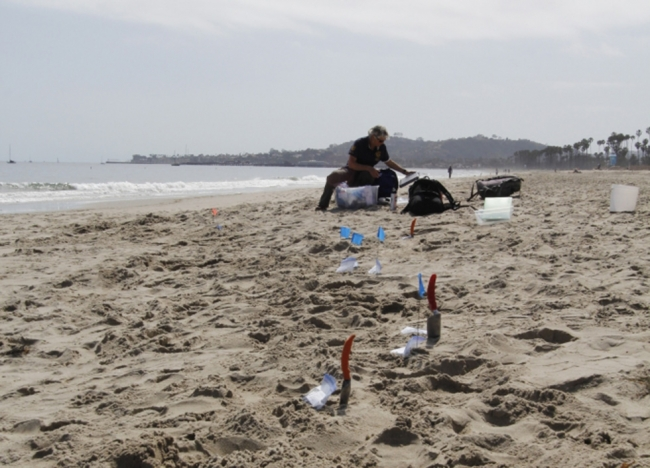 Small sample bags and shovels along a beach with a person in the background.