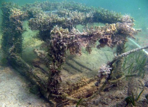 A derelict lobster trap sitting on the seafloor covered in plant life.
