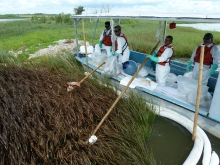 People on a boat holding wooden poles with a sorbent end against an oiled marsh area.