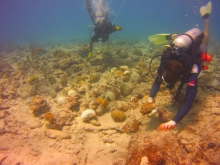 Divers reattaching coral to the sea floor.
