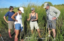 A group of people in tall grass looking at a plot of ground.