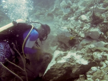 A diver working on coral.