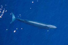 An aerial view of a whale.