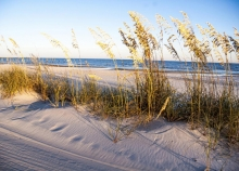 A view of tall grass on a sandy beach with ocean in the background.